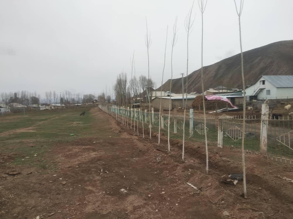 Высадка саженцев фруктовых деревьев