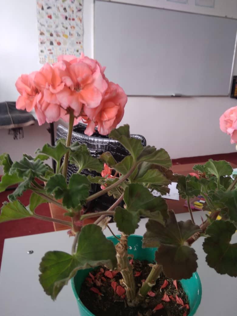 Цветы в школах проекта